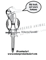 Helmeted Hornbill Colouring Page - Helmeted Hornbill Coloring Page - Endangered Animal Art