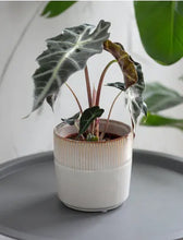 Load image into Gallery viewer, Ceramic Plant Pot