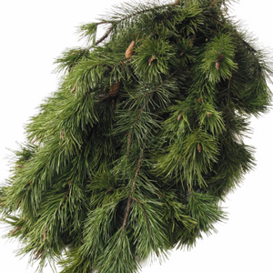 Evergreen Boughs, #3 Florist Bunch-Do It Yourself-Christmas Delivered