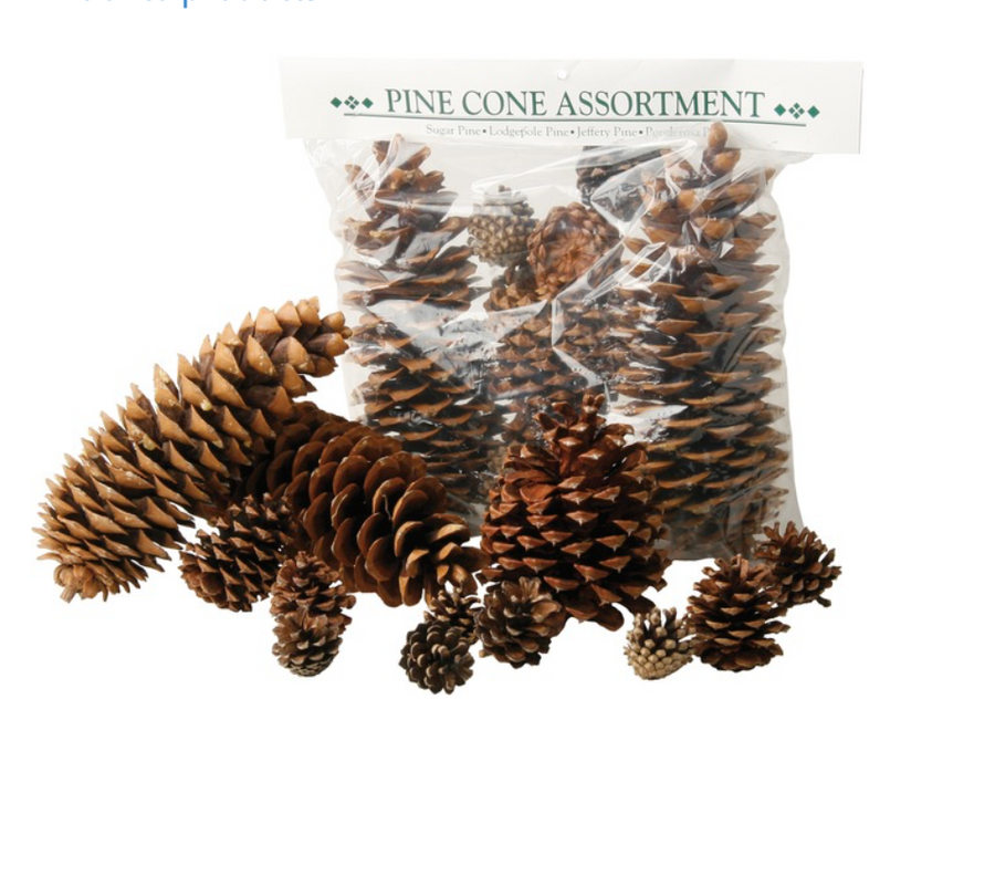 Assorted Pine Cones-Do It Yourself-Christmas Delivered