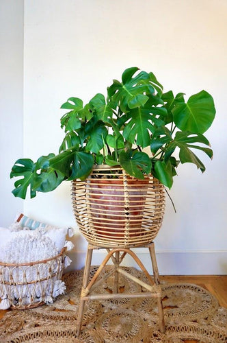 Large Rattan Plant Stand *In Store Pick Up Only* Plant Stand Picnic Imports
