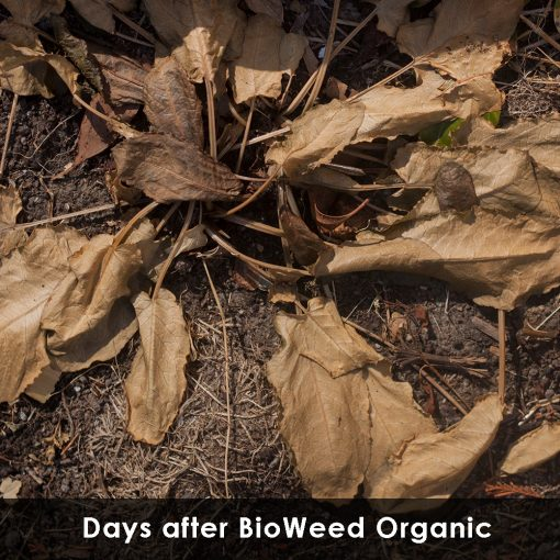 Bioweed 10L Concentrate