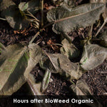 Bioweed 5L Concentrate