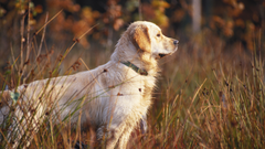 The Benefits of Rotational Feeding for Dogs