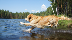 Tips to Keep Your Dog Active & Fit
