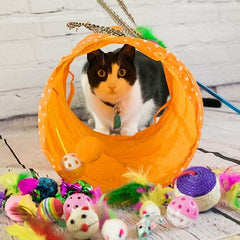 Cat Tunnel and Toy Set