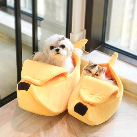 dog and cat in banana-shaped beds