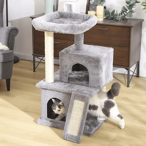 cat playing in cat condo and tree house