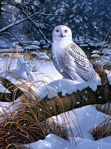 Amazing Snow Owl Paint by Diamonds