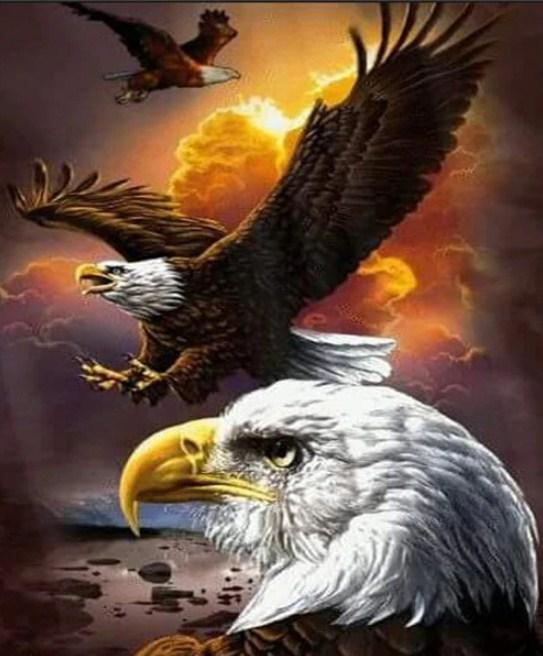 Angry Bald Eagle Diamond Painting Kit