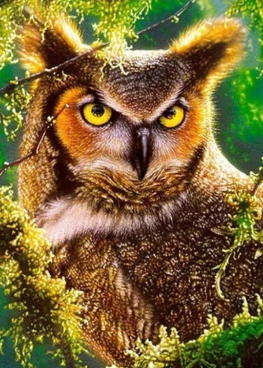 Angry Horned Owl Paint by Diamonds