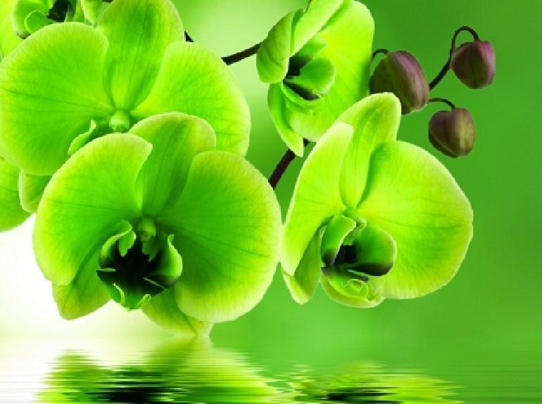 Green Orchids Diamond Painting Kit