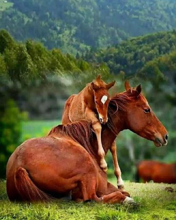 Horse Baby Hugging the Mother Diamond Painting