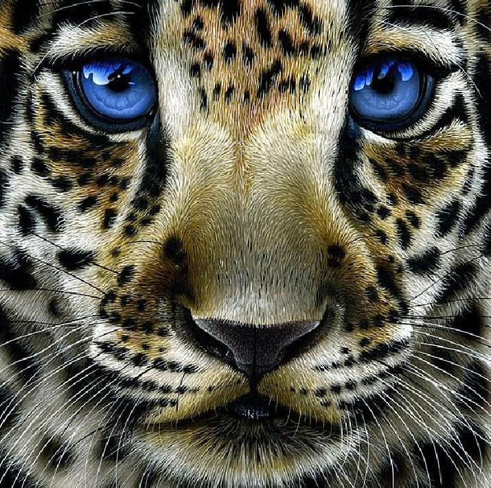 Leopard Cub with Blue Eyes Diamond Painting