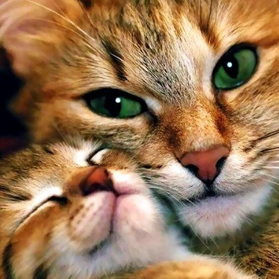 Mother Cat & Baby Cat Paint by Diamonds