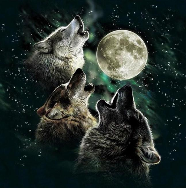 Pack of Howling Wolves Paint by Diamonds