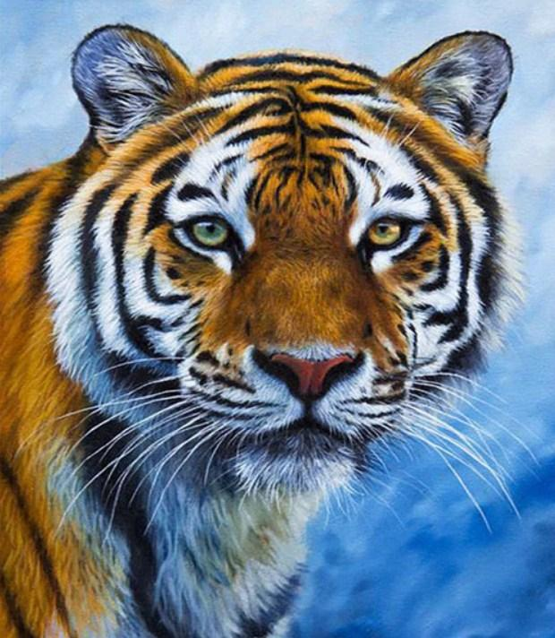 Serene Tiger Paint by Diamonds