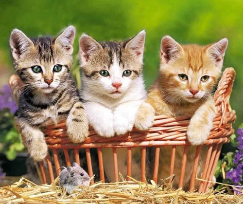 Three Lovely Kittens Diamond Painting Kit