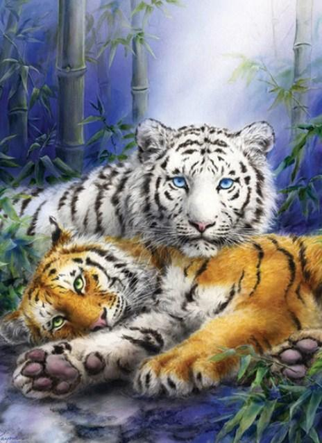 White & Brown Tigers Paint by Diamonds