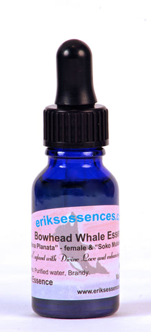 WE 11. Bowhead Whale ( Mana Planata - female & Soko Mukaku - male ). 15ml