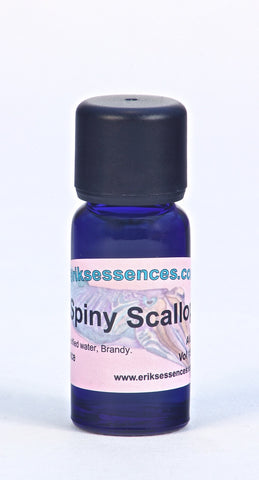 SE 20. Spiny Scallop - purple. Sea Essence. 15ml