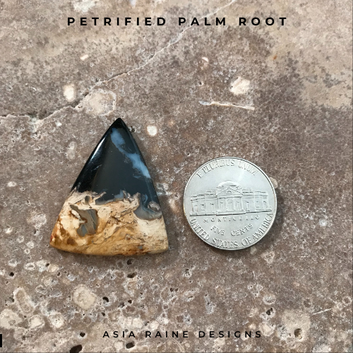 Petrified Palm Root