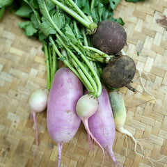 Radish, Seasonal Mix Large - kg