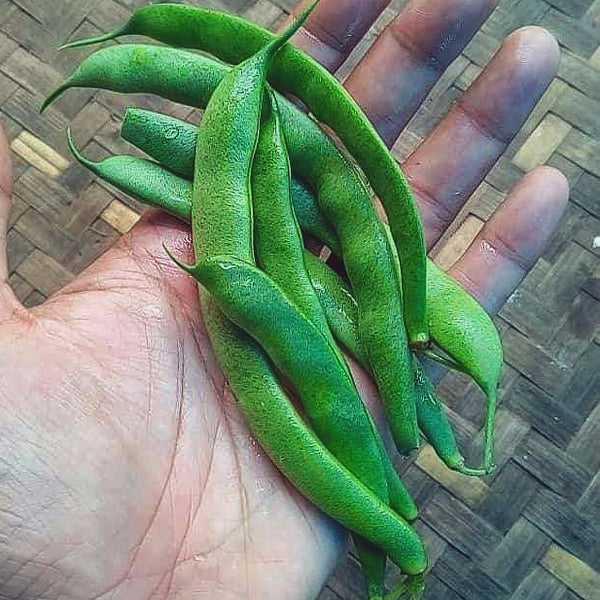 Bean, Green Bush - 300 g