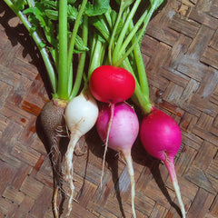 Radish, Seasonal Mix - 150 g