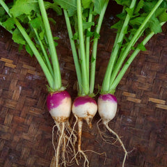 Turnip, Purple Top - 500 g