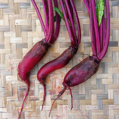Beetroot Deep Red, Cylindra - 1 kg