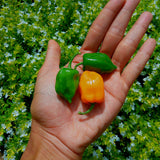 Chili Habanero Hot Pepper - 100 g