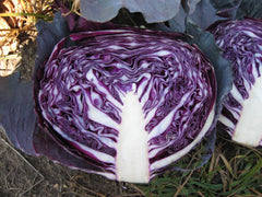 Cabbage, Red /  Homegrown - 1 kg