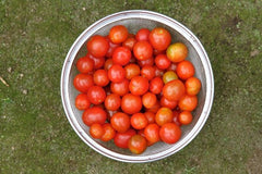 Tomato, Cherry Red Improved- 250 g