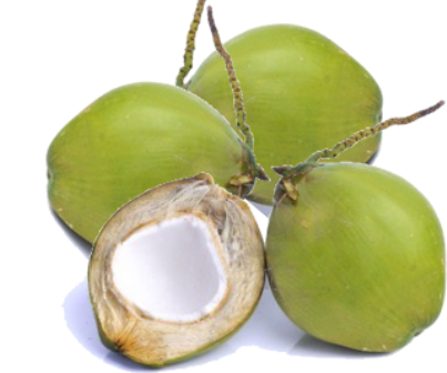 Coconut, young - pcs