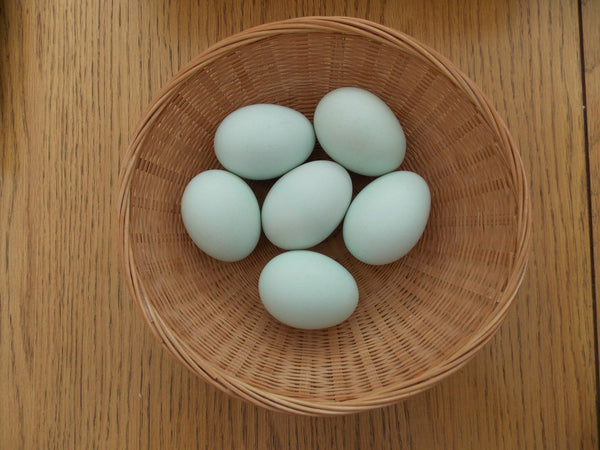 Eggs Non Breed Chicken (Ayam Kampung) - 10 pcs