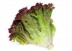 Lettuce, Lollo Rosa Frilled Red Leaf - 200g