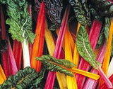 Swisschard, Rainbow - 250g