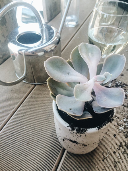 Wine and Succulents = Perfection