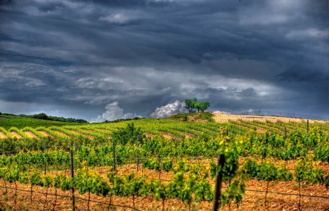 Moody vineyard in Rioja, Spain