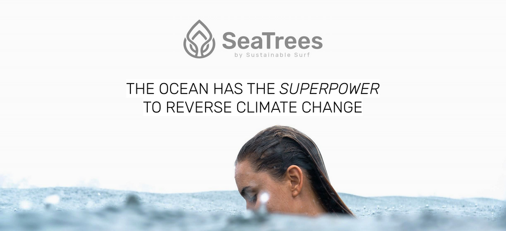 The ocean has superpowers to reverse climate change