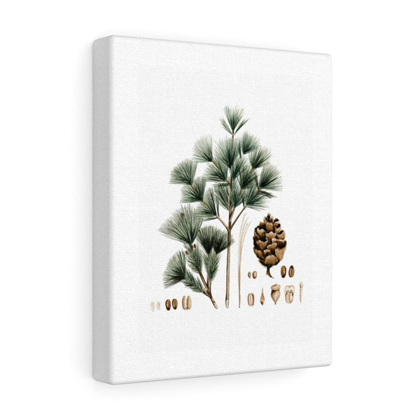 Evergreen Canvas Gallery Wraps