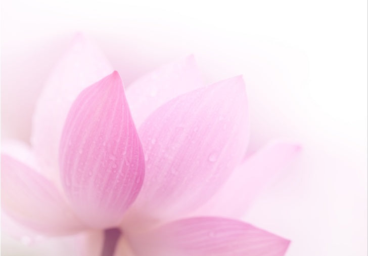 Pink Lotus - Poster Print available AUS ONLY atm