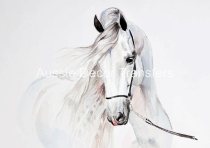 Watercolour White Horse - Poster Print only avail AUS atm