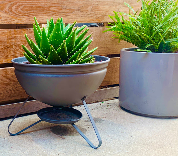 Repurposed Charcoal Grill w/ Mitre Aloe