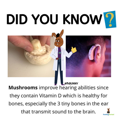 Hidden Benefit of Mushrooms