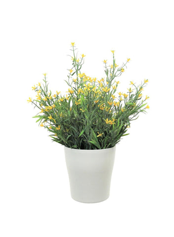 Potted Daisy Bunch - Yellow