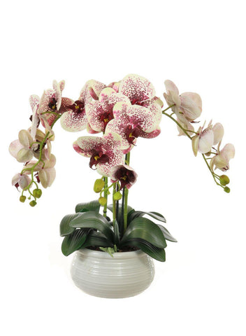Triple Orchid Arrangement In Lined Bowl - Harlequin