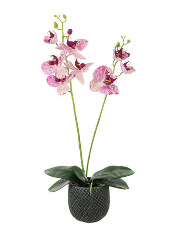 Two Stem Orchid Arrangement - Light Speckled