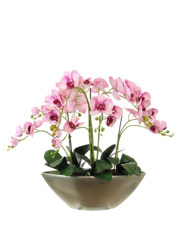 Orchid Arrangement In Ark Bowl - Freckled Pink